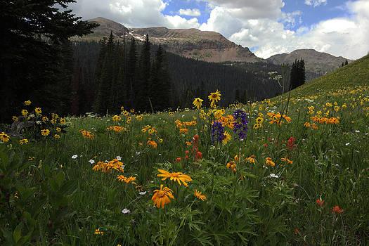 Susan Rovira - Crested Butte Wildflowers 3