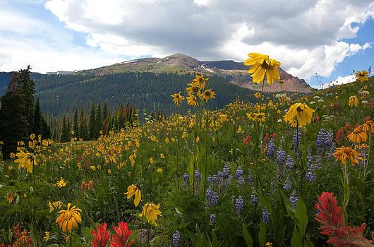Susan Rovira - Crested Butte Wildflowers