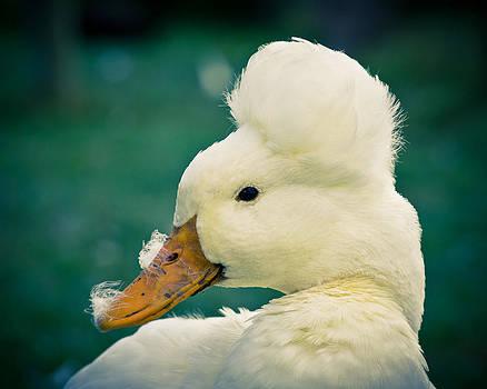 Priya Ghose - Crested Duck