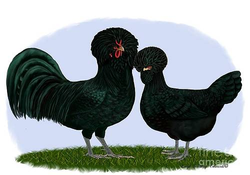 Crevvecoeur Rooster and Hen by Leigh Schilling