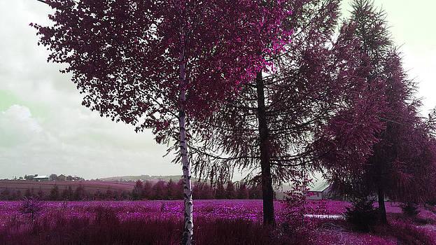 Crimson Land by Davina Nicholas