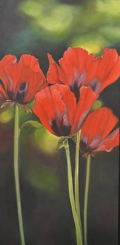 Crimson Petals by Stella Marin