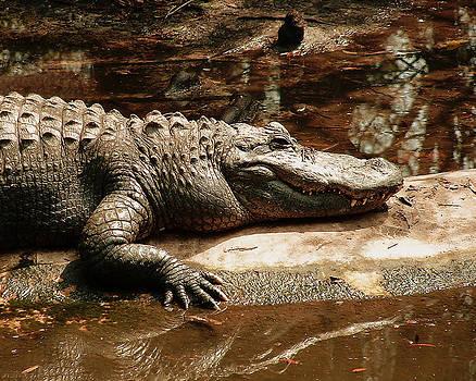 Crocodile by Tanya Hamell