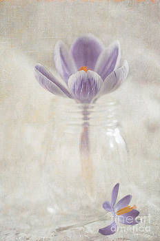 Crocus by Marion Galt