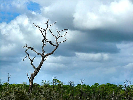 Julie Dant - Crooked Tree on Crooked Island