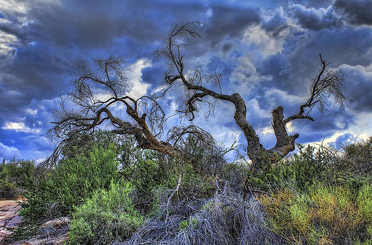 Crooked Tree Storm by Ryan Seek