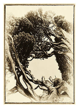 Hakon Soreide - Crooked Trees