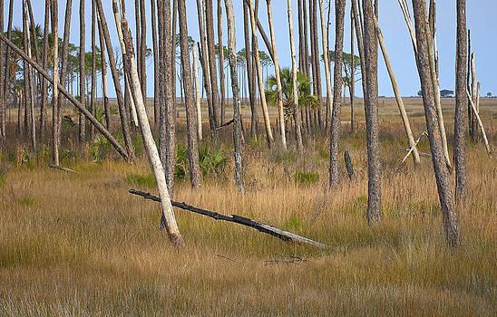Bill Chambers - Crossed Trees