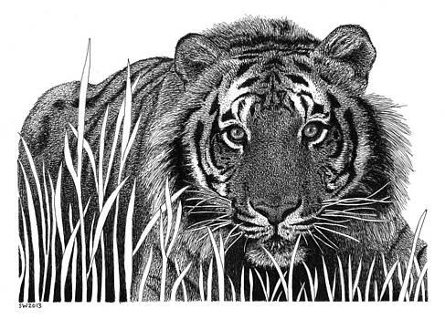 Crouching Tiger by Scott Woyak