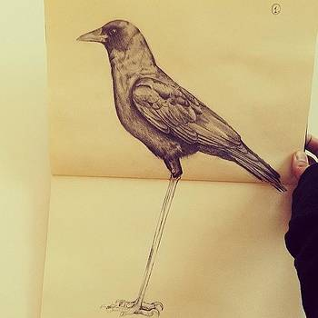 Crow Graphite I'm Working On. Nearly by Tifanie Chaney