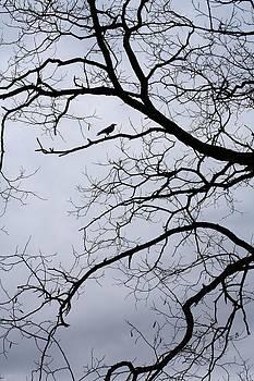 Crow Tree by Tammy Franck