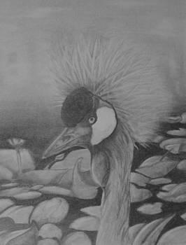 Crowned Crane by Raquel Ventura