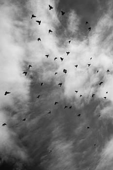 Crows in Flight by Azriel Knight