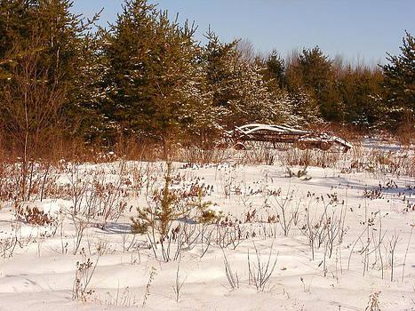 Cruel Winter by Jon Lacelle