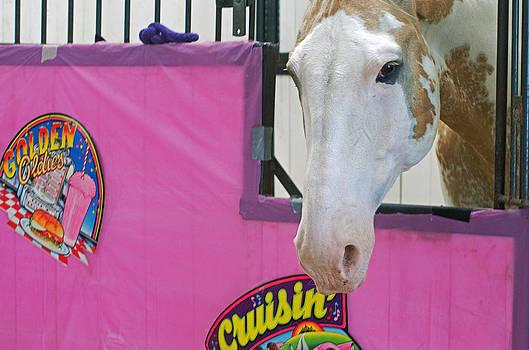 Cruisin horse by Cheryl Cencich