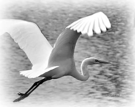 Cruising Crane by Dale Paul
