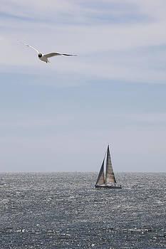 Cruising Sailboat by Gillian Dernie