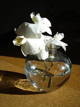 Crystal Clear - Vase with White Flower by Jessica Gale