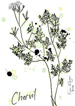 Culinary Herbs - Chervil by Fiona Morgan
