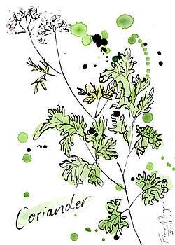 Culinary Herbs - Coriander by Fiona Morgan