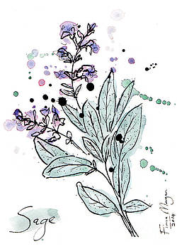 Culinary Herbs - Sage by Fiona Morgan