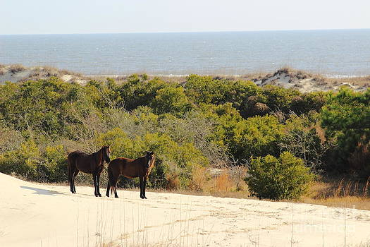 Sand Duned Horses by Andre Turner