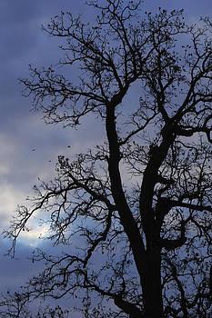 Cumulus Tree by Daniel Kasztelan