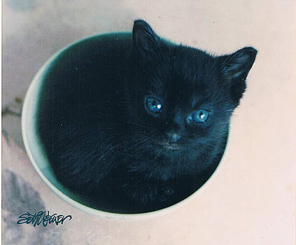 Cup O'Kitty by Seth Weaver