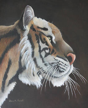 CURIOSITY-Siberian Tiger by Patricia Mansell