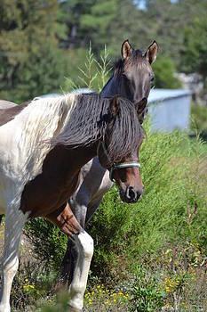 Joe Bledsoe - Curious as a Horse can be