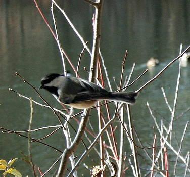 Curious Bird by Stephen Melcher
