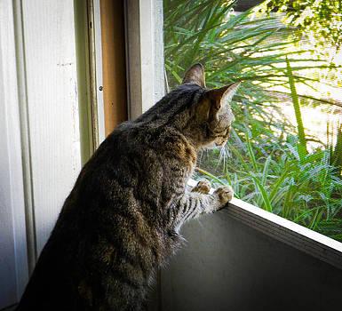 Christy Usilton - Curious Cat
