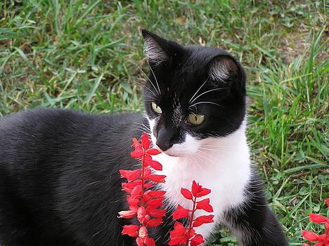 Curious Cat by Marisa Horn