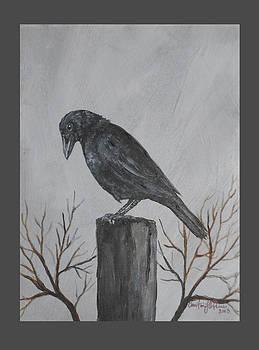 Curious Crow by Christine StPierre