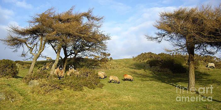 Malcolm Suttle - Curious Cumbrian Sheep