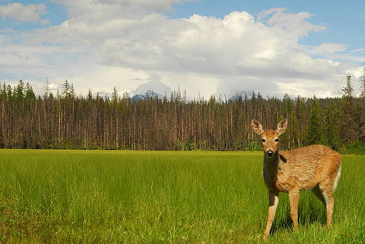 Curious Deer in Glacier National Park by Larry Moloney