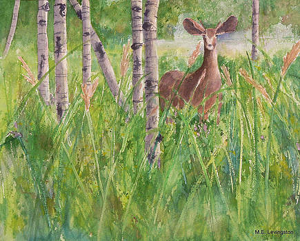 Curious Doe by Mary Levingston