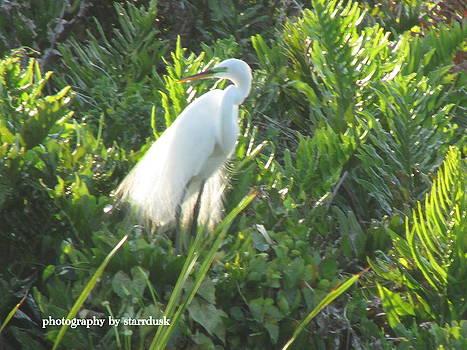 Curious Egret by Debi K Baughman