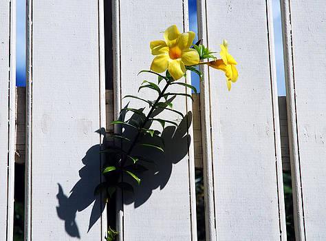 Ramunas Bruzas - Curious Flowers