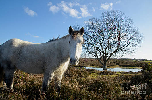 Curious horse in the New Forest national park - England by OUAP Photography