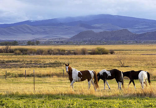 Curious Horses by lake Helena by Dana Moyer