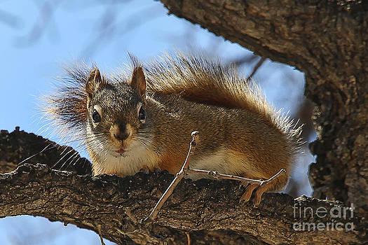 Teresa Zieba - Curious Squirrel