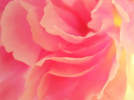 Curling Blossom by AugenWerk Susann Serfezi