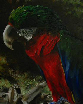 Curtis the Parrot by Sherry Robinson