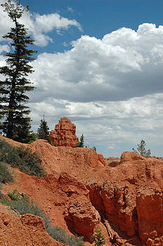 Curvac3ous Tree on the Rim of Bryce Canyon by Bruce Gourley