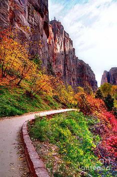 Curves through Fall by Diana Vitoshka