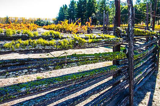 Custom Fence line in Napa by Brian Williamson