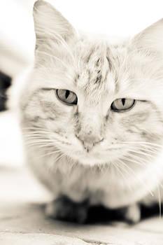 Cute Cat... by Ckworkshop