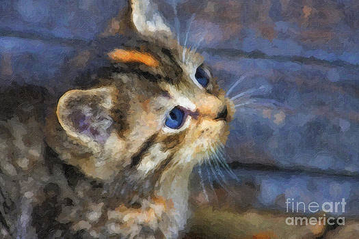 Jill Lang - Cute Kitten Oil Painting