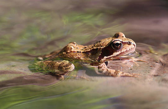 Dreamland Media - Cute Litte Creek Frog